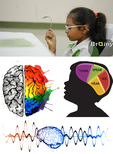 Whole Brain Development
